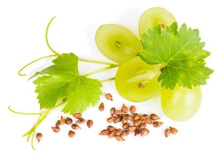 Testen Sie Traubenkernöl