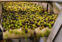 Ölmühle Olivenöl Herstellung